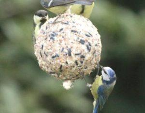 Vogelvoer maken